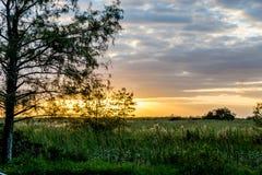 Por do sol nos marismas através do pântano da grama imagens de stock royalty free