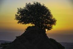 Por do sol O sol brilha através dos ramos de uma árvore Imagem de Stock