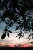 Por do sol, o Pampas, Bolívia Imagem de Stock