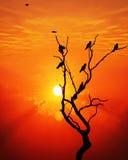 Por do sol & pássaros Fotos de Stock
