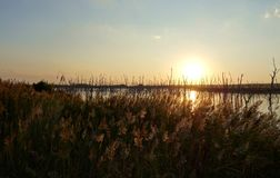 Por do sol do pantanal Fotografia de Stock Royalty Free