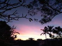 Por do sol pastel encantador com bordadura da silhueta da árvore Imagens de Stock Royalty Free