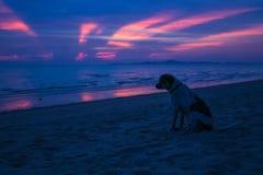 Por do sol profundamente roxo Imagem de Stock Royalty Free
