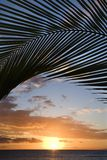 Por do sol quadro pela palma, Maui. Fotografia de Stock