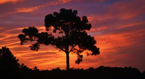 Por do sol roxo/alaranjado Foto de Stock