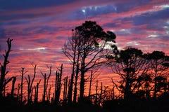 Por do sol roxo/rosa Imagens de Stock
