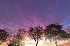 Por do sol roxo rural sobre árvores do inverno foto de stock royalty free