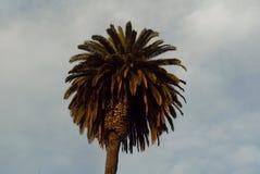Por do sol San Diego Palm foto de stock