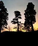 Por do sol sempre-verde do inverno Fotografia de Stock Royalty Free