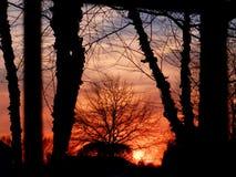 Por do sol Silhouete Fotos de Stock Royalty Free