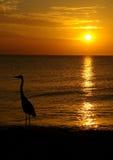 Por do sol sobre a água com pássaro imagem de stock