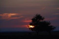Por do sol sobre a área da urze em Kongenshus em Dinamarca Imagem de Stock