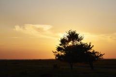 Por do sol sobre a área da urze em Kongenshus em Dinamarca Foto de Stock Royalty Free