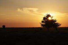 Por do sol sobre a área da urze em Kongenshus em Dinamarca Imagem de Stock Royalty Free