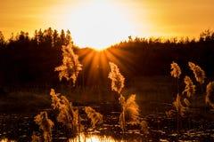 Por do sol sobre árvores em Forest Pond fotos de stock royalty free