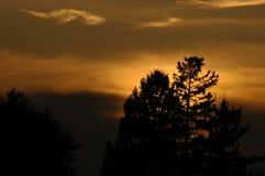Por do sol sobre as árvores Imagens de Stock