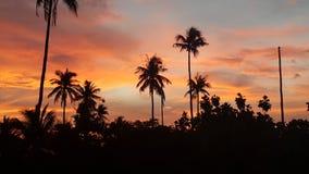 Por do sol sobre as palmas Fotografia de Stock Royalty Free