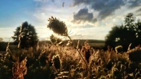 Por do sol sobre campos Foto de Stock Royalty Free