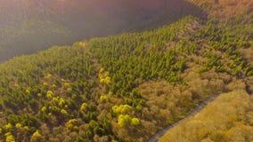 Por do sol sobre a estrada através da floresta colorida do outono video estoque
