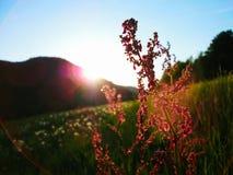 Por do sol sobre a flor Foto de Stock