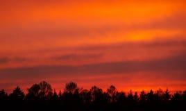 Por do sol sobre a floresta Imagens de Stock