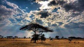 Por do sol sobre a grande reserva Tanzânia do jogo de Selous imagem de stock