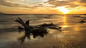 Por do sol sobre a madeira lançada à costa Imagens de Stock Royalty Free