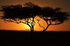 Por do sol sobre montanhas com a ?rvore com o sol que brilha atrav?s das nuvens das montanhas das nuvens foto de stock