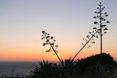 Por do sol sobre o americano da agave da ilha do mar Mediterrâneo e do Gozo fotografia de stock