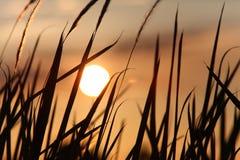 Por do sol sobre o campo de milho Fotos de Stock Royalty Free