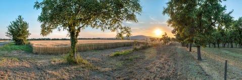 Por do sol sobre o campo de trigo Imagens de Stock Royalty Free