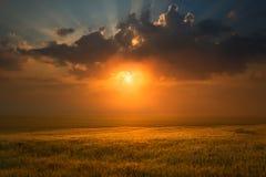 Por do sol sobre o campo de trigo para o sol de ajuste Imagens de Stock Royalty Free