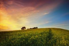 Por do sol sobre o campo do rapeseed Imagem de Stock Royalty Free