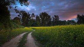 Por do sol sobre o campo do rapeseed Imagens de Stock Royalty Free