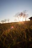 Por do sol sobre o campo gramíneo Fotografia de Stock Royalty Free