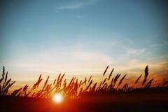Por do sol sobre o campo do milho fotografia de stock royalty free