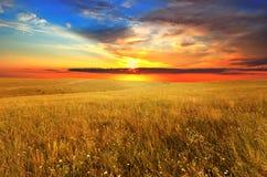 Por do sol sobre o campo selvagem fotografia de stock