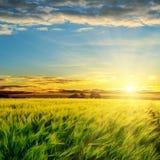 Por do sol sobre o campo verde foto de stock royalty free