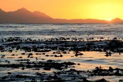 Por do sol sobre o kelp Fotografia de Stock