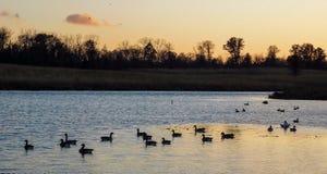 Por do sol sobre o lago fotografia de stock royalty free