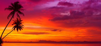 Por do sol sobre o oceano com palmeiras tropicais Imagem de Stock Royalty Free