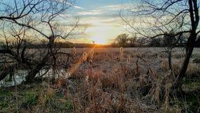 Por do sol sobre o pântano pantanoso que Shinning em Cattails fotografia de stock royalty free