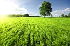 Por do sol sobre o prado Imagens de Stock