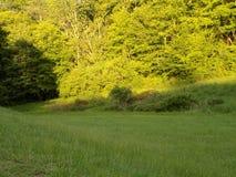 Por do sol sobre o prado fotografia de stock