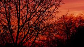 Por do sol sobre o vídeo do timelapse dos ramos de árvore filme