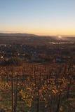 Por do sol sobre o vinhedo italiano no outono Imagem de Stock