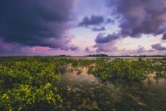 Por do sol sobre os mangorves Imagens de Stock Royalty Free