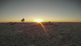 Por do sol sobre a praia com regaços das gaivotas a tempo vídeos de arquivo