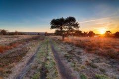 Por do sol sobre Studland Heath imagens de stock royalty free