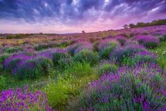Por do sol sobre um campo da alfazema do verão em Tihany, Hungria Imagem de Stock